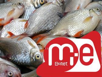 ماهی ، فروش بچه ماهی