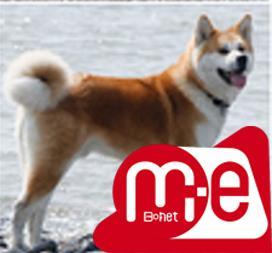 فروش سگ آکیتا آمریکایی ، فروش توله آکیتا ژاپنی