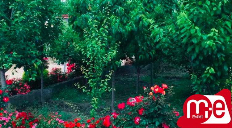 باغ و ویلا اجاره ای استخر دار آبگرم شاهنامه